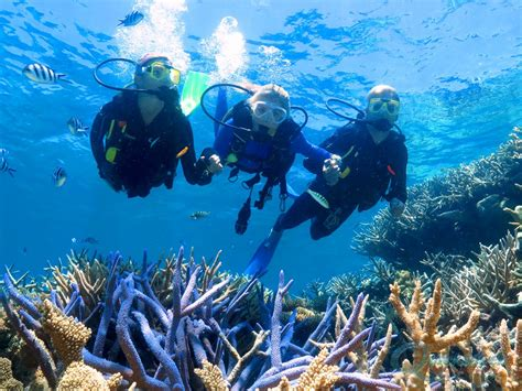 scuba dive diving on the great barrier reef scuba dive cairns and