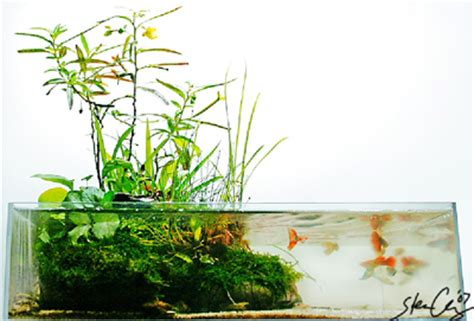 japanese aquascape aquascaping world magazine wabi kusa aquascaping