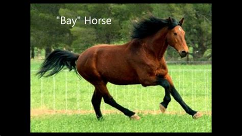 colors of episode quot horses 101 quot the colors of horses episode 1