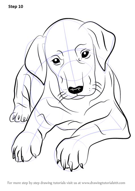 learn how to dogs learn how to draw doberman puppy dogs step by step drawing tutorials