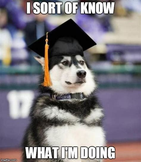 Dog Meme Generator - graduate dog meme generator imgflip be funny pinterest generators meme and dog