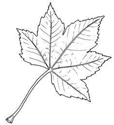 Fensterdeko Herbst Blätter by Pin Waltraud Rieger Auf Herbst Bl 228 Tter