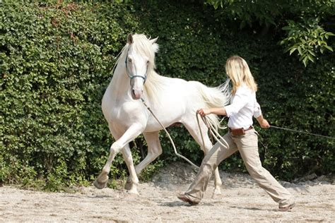 tales of horsemanship an inside look at the secrets of successful revealed through stories books curso de doma hurricane hipica tarifa