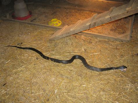 Garden Snake House Sue S In The Garden Growing The Groceries Snake In The