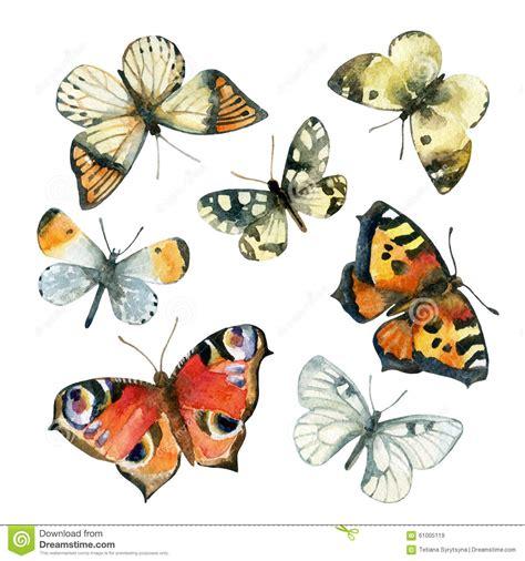 Butterfly Set butterfly set vector cartoondealer 22419741