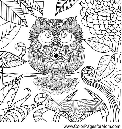advanced dolphin coloring pages free dolphins advanced coloring pages