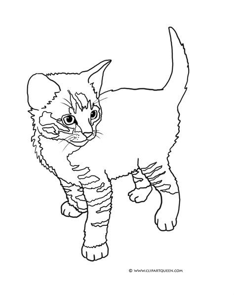 Picture Of A Cat To Color by Cat Coloring Pages