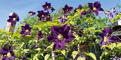 fiori da piantare in giardino fiori giardino balcone e terrazzo green