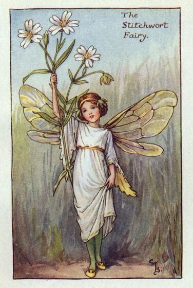 fate dei fiori cicely barker picture of cicely barker