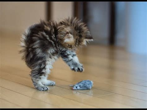 8 Best Cat by Best Cat Toys Best Cat Toys For Active Cats