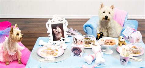 Birthday Surprises For Your Pet by Dogs For Your Special Family Member