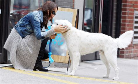 olivia wilde coffee run with paco 04 view image olivia wilde takes her dog for a walk zimbio