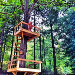 Pinterest Treehouse - we built this treehouse on pinterest and hope her bad mother