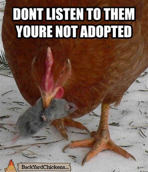 Funny Chicken Memes - chicken meme pictures to pin on pinterest thepinsta