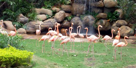entrada zoológico barranquilla zool 243 gico en cartagena archivo digital de noticias de