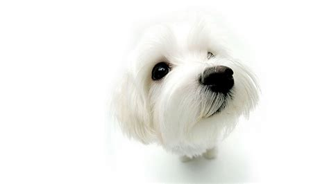 3742 dog hd wallpapers background images wallpaper abyss dog full hd wallpaper and background image 1920x1080