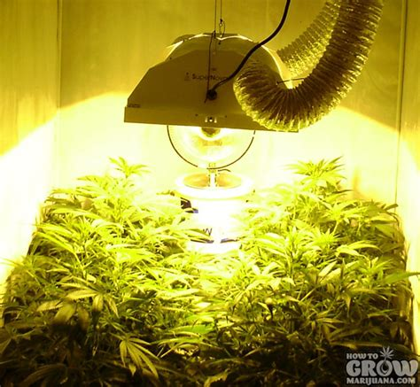 indoor marijuana grow lights hps grow lights