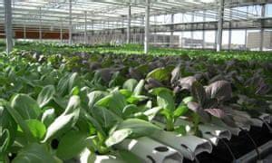 gen urban farms  innovative projects