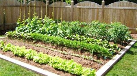 Planning A Beginners Vegetable Garden Nixa Lawn Service Vegetable Gardens For Beginners