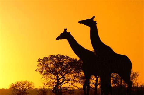 sudafrica imagenes reservas naturales de sudafrica