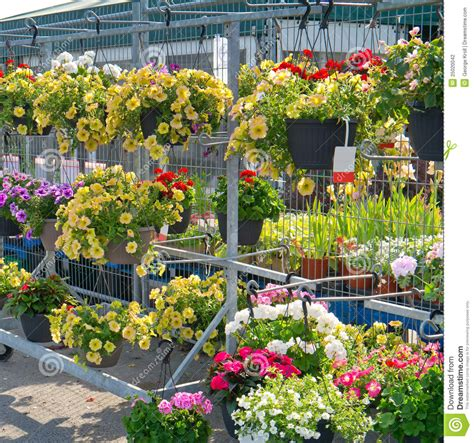 Hanging Flower Garden Hanging Flower Baskets In Garden Center Stock Photography Image 25020042