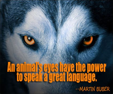 Animal Quotes Quotes About Endangered Animals Quotesgram