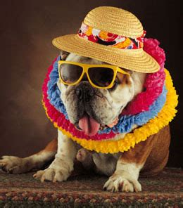 hawaiian names for dogs awesomely breezy hawaiian names and their meaning for a happy