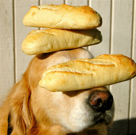 can dogs eat bread can dogs eat bread every day inbox