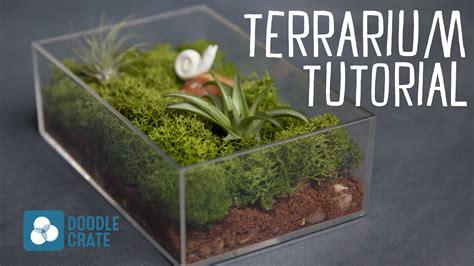 how to create an air plant terrarium youtube