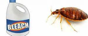 how to kill get rid of bed bugs ask home design
