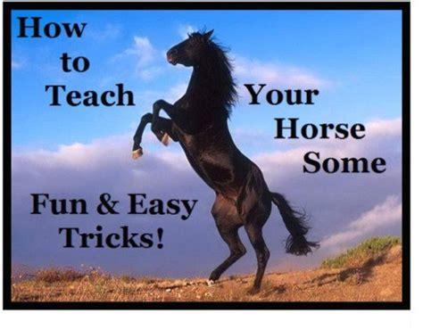 easy tricks to teach your simple tricks to teach your
