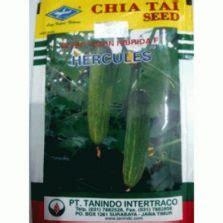 Benih Timun F1 Kemasan Known You Seed manfaat bunga evening primrose untuk kesehatan