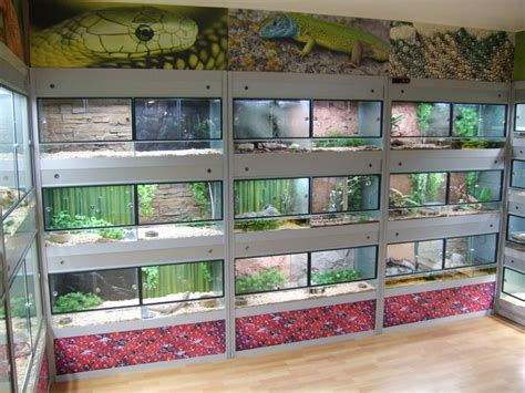 Reptile Rooms by 1000 Ideas About Reptile Cage On Reptile
