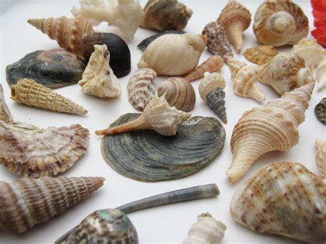 Kerang Mutiara Laut gambar alam hewan perjalanan hidangan koleksi makro