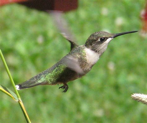 hummingbird learning kit ourworldnetwork