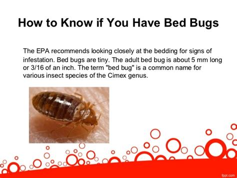 signs you may need a bed bug exterminator