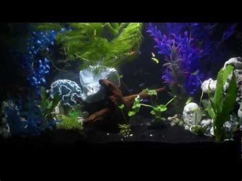 Glofish 29084 Aquarium Gravel Black Freshwater 29 Gal Tank With Black Sand And Background