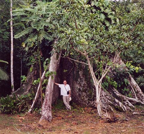the sixteen trees of buttress root wikipedia