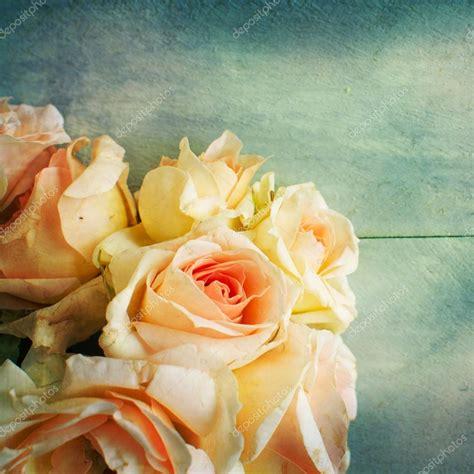 imagenes de rosas frescas flores de rosas frescas hermosas fotos de stock