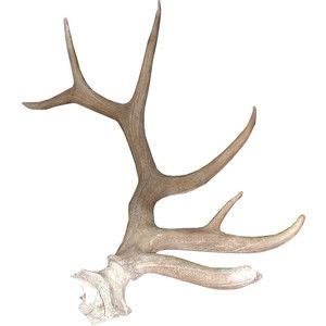 elk horns profile google search graphic design