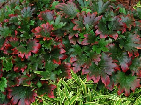 top 28 zone 10 shade plants a guide to northeastern gardening best long blooming shade