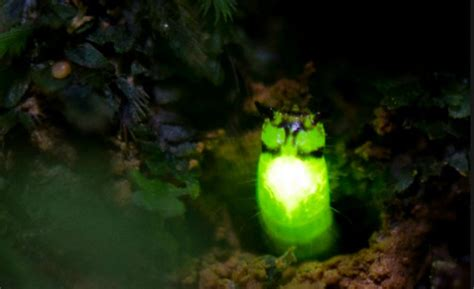 last of the glow worms memoir of a nuclear weapons technician at the end of the cold war books discovered the stunning glow worm of the