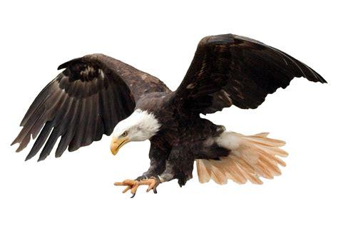 American Eagle Head Png