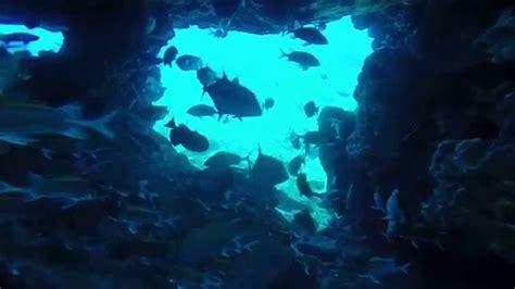 boatswain bird island diving boatswain bird rock ascension island youtube
