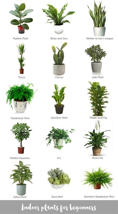 indoor plants for the home pinterest low lights collage of awesome indoor plants bomboracustomfurniture