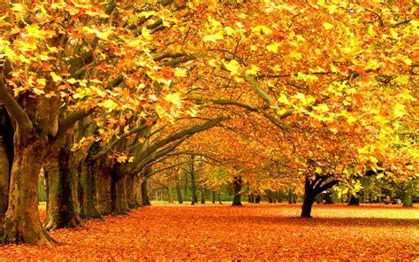 beautiful fall 4k hd desktop fall images wallpaper hd hd desktop wallpapers 4k hd