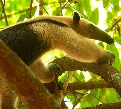imagenes de animales la selva animales de la selva tropical queanimal