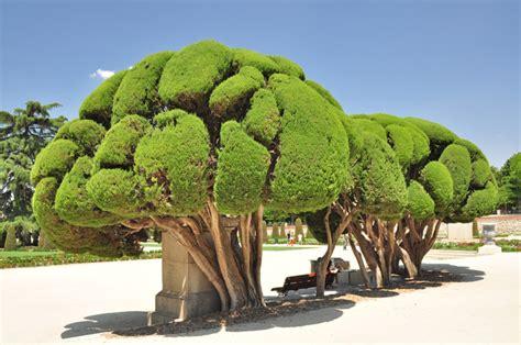 imagenes de jardines antiguos el retiro senda bot 225 nica 1 quot los jardines m 225 s antiguos quot