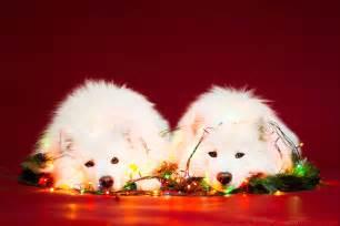 christmas themed names dogs i took christmas themed dog portraits to wish you happy