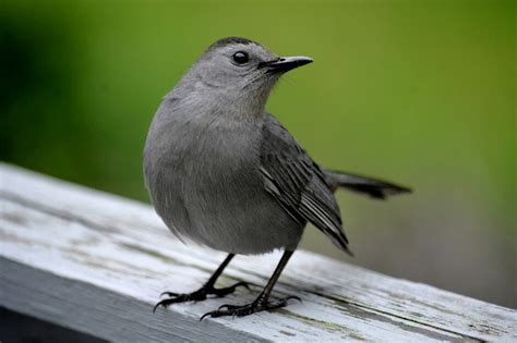 How To Scare Birds Away From Patio by Safe Ways To Keep Birds Away From The Patio Porch And Deck